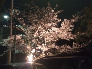 4月12日お花見